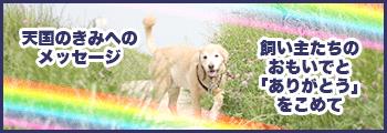 天国の愛犬の思い出・ペットロス