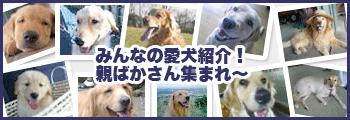 飼い主さんの広場&愛犬紹介